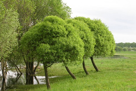 Spherical willows